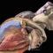 EpiHealth – En storsatsning för lunds och uppsala universitet av betydelse för kardiovaskulär forskning